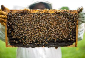 Fabian Franke Journalist Reporter Rettet die Bienen Volksbegehren